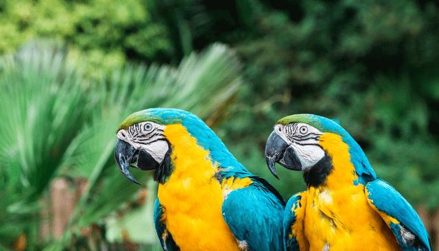 Explore Jungle Island In Miami